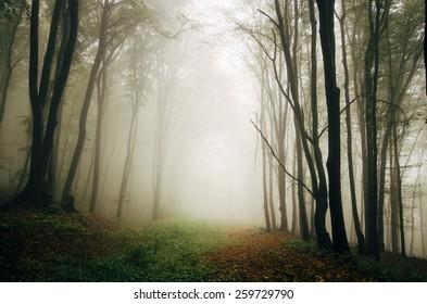green forest natural spring landscape