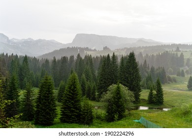 A green forest on a mountain background