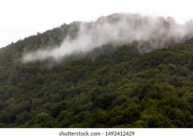 Green forest on a mountain, smoke-like white fog, morning mist floating above the dense woods, clouds, rain above the forest area