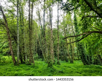 Green forest on the stone and water route along Armenteira river in Ribadumia tow, Galicia, Spain