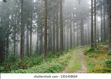 A green forest on a very foggy day