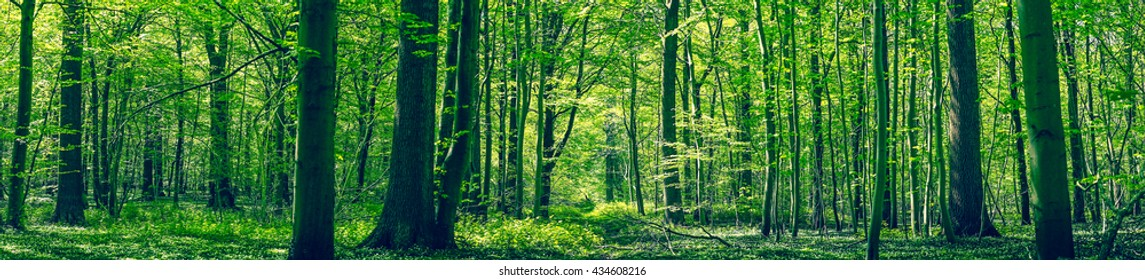 Green forest panorama scenery in the spring