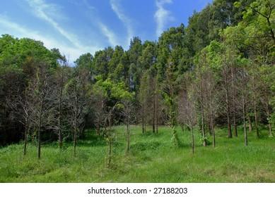 Green Forest Park under blue sky