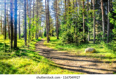 Green forest path in sunny day landscape. Forest path way sunlight scene. Forest path in sunny day view