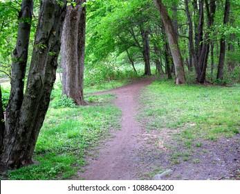Green Forest Path - Trail through a dark green forest landscape.