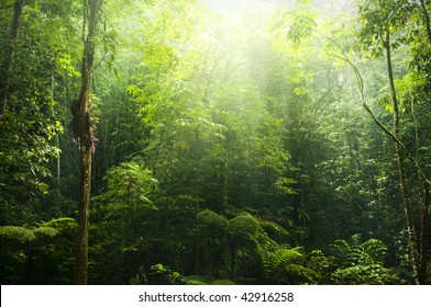 Green forest with ray of light.