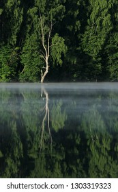 Green forest is reflected in the river and light fog over the water