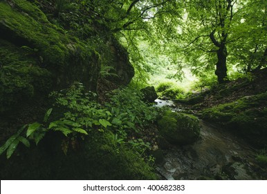 green forest river with lush vegetation
