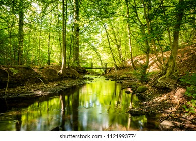 Green forest with a river running through under a bridge in the summer