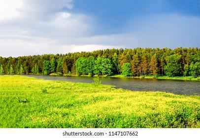 Green forest river shore landscape. Forest river shore panorama. Summer forest river shore view