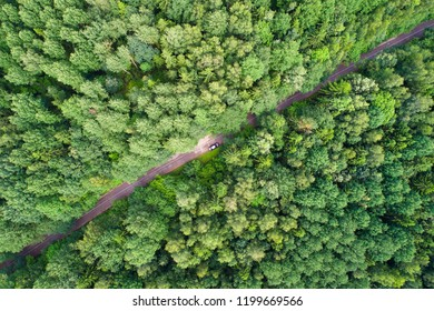 Green forest with road from above. Car moving through forest. Vacation background.