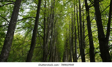 Green forest in Russia Moscow