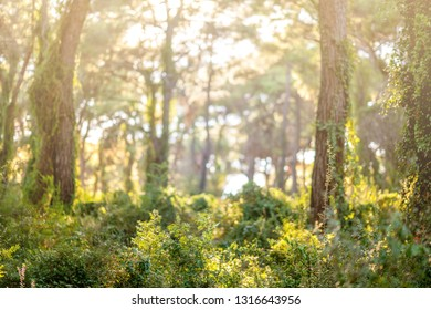 Green Forest Scenery with sun light. Nature Landscape.
