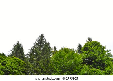Green forest skyline against white background