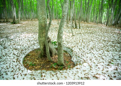 Green forest with snowpack
