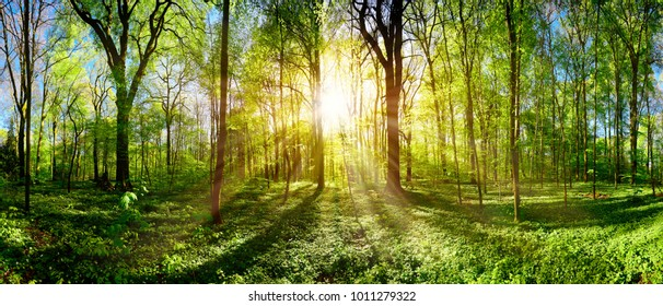 Green forest in spring and summer with bright sun shining through the trees