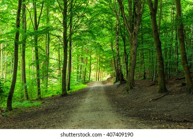Green forest with straight pathway in beautiful green colors.