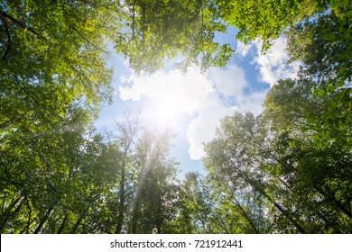 Green forest. Sun light through treetops. Summer.