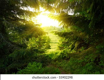 Green forest with sun ray