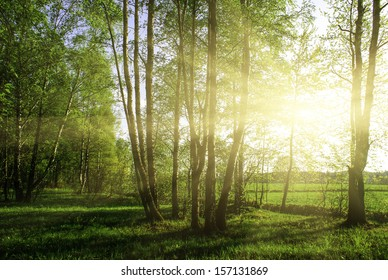 green forest at sunset sunrise sun and sunbeams
