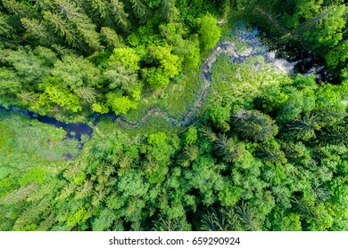 Green forest, swamp and small river captured from above with a drone.