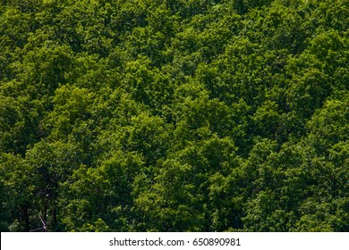 Green forest texture