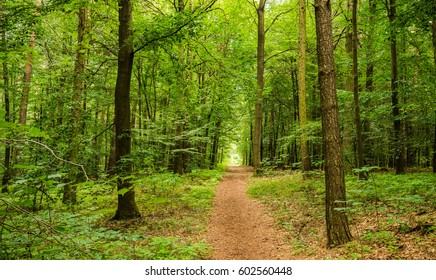 Green forest track.