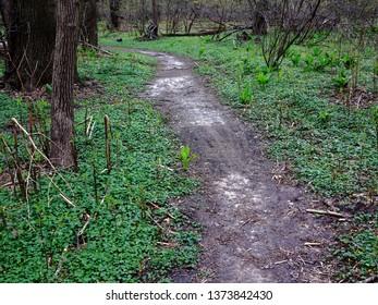 Green Forest Trail - Path through a dark green forest landscape.