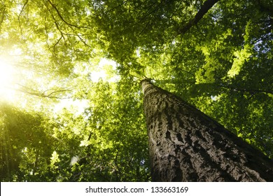 Green forest. Tree with green Leaves bottom view background