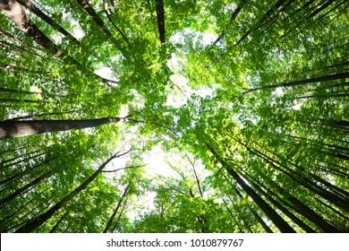 Grüner Wald. Baum mit grünen Blättern und Sonnenlicht. Hintergrund