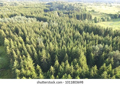 Green forest tree tops birds eye view - Green landscape aerial view - Forestry aerial photo