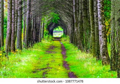 Green forest tunnel road landscape. Forest tunnel road way. Dark forest tunnel road scene