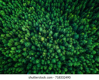 Green Forest, view from above, top view, toned