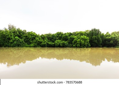 The green forest in the water, Mangroves tree background, Beautiful shadow of green tree on river, Green leaves bush with reflected shadow, Nature tree with bright sun light and clear sky background