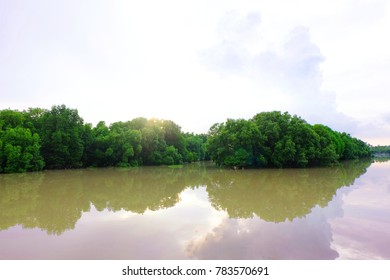 The green forest in the water, Mangroves tree background.