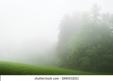 Green forest with white fog. Minimal image with whitespace.