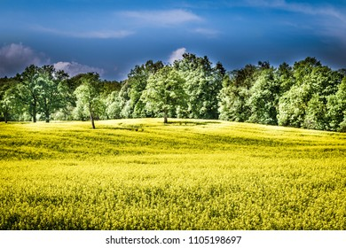 green forests and yellow fields