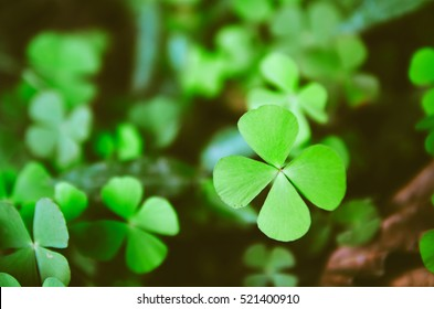 Green four leaf clovers