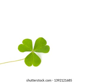 Green four-leaf clover leaf on white background.