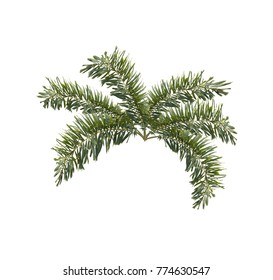 green foxtail palm leaf tree isolated on white background