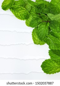 green freash papermint mint aromatic on background