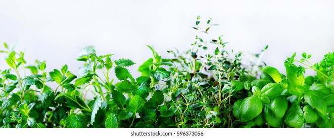Green fresh aromatic herbs - melissa, mint, thyme, basil, parsley on white background. Banner collage frame from plants. Copyspace. Top view. Toned effect