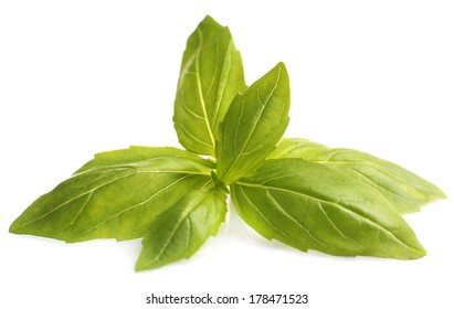 Green fresh basil, isolated on white