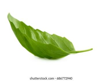 Green fresh basil leaf isolated on white background