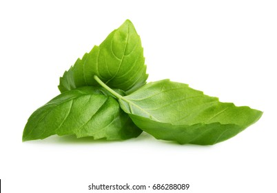 Green fresh basil leaves isolated on white background