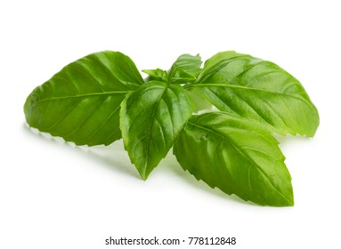Green fresh basil leaves isolated on white background