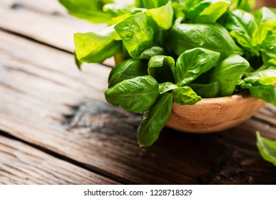 Green fresh basil on the wooden table, selective focus