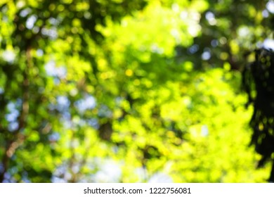 green fresh bokeh of leaf in forest.