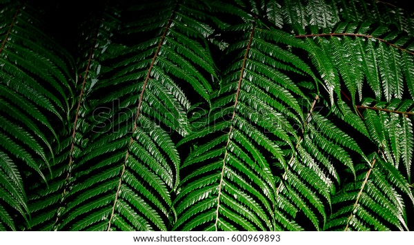 Green fresh bush of fern in the forest