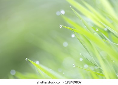 green fresh grass in morning dew with bokeh